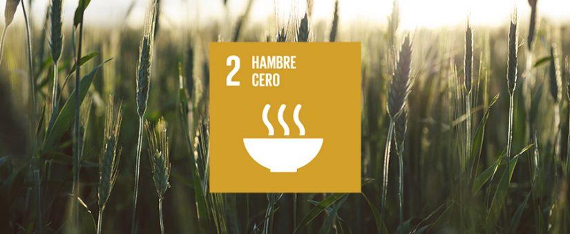 #COMPANIES4SDGs hace balance del segundo ODS: hambre cero