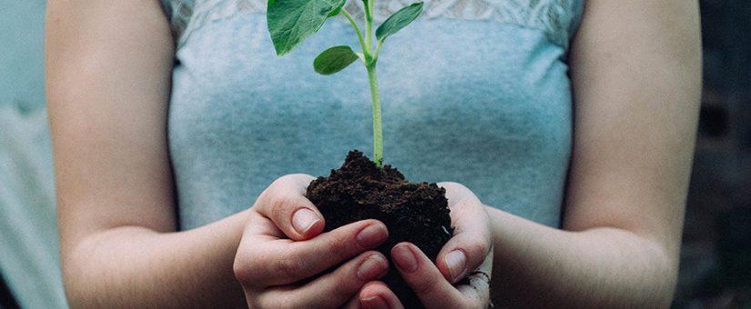 Mes del medio ambiente: promueve un planeta más sostenible entre tus empleados